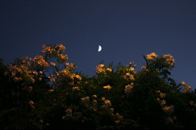 Plant Beauty In Nature Sky Growth No People Nature Tranquility Tree Freshness Flower Flowering Plant Day Low Angle View Moon Outdoors Scenics - Nature Clear Sky Animal Themes Tranquil Scene Land