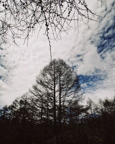 Tree Bare Tree Branch Low Angle View Sky Nature Beauty In Nature Tranquility Tranquil Scene Day Cloud - Sky Outdoors No People Scenics Lone Holiday Vacations Live For The Story The Great Outdoors - 2017 EyeEm Awards Be. Ready. Go Higher
