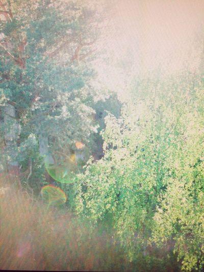 brandenburg Langsamkeit Traum Spektralfarben Blendenfleck Gegenlicht Lichtfleck Grün Moiré Nature No People Tree Day Growth Forest Outdoors Beauty In Nature Close-up Love Yourself