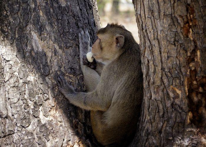 Close-up of monkey sitting on tree trunk