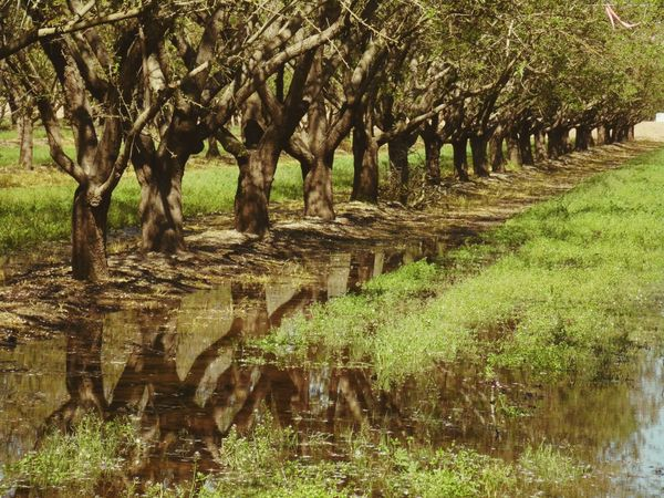 Irrigating... Spring Almond Orchard Hugging A Tree California Agriculture Rural Scenes Golden Afternoon There Is No Planet B Samsung Camera