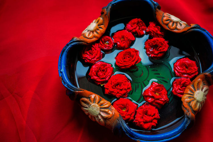 Organic red rose in a pot filled with pure water