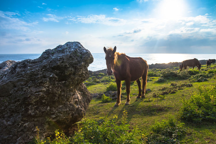 Horses standing at yonaguni island against sky