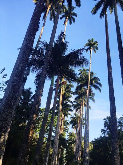 Jardim Botânico Rj Jardimbotanico Jardim Botanico Naturelovers Nature Photography Nature_perfection Nature Riodejaneiro Rio De Janeiro