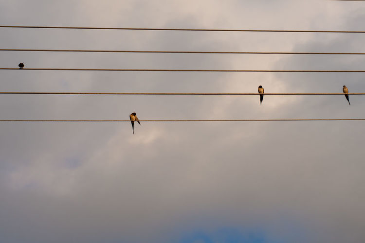 Birds perching on electricity cable