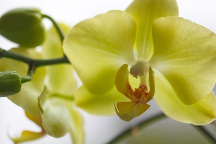 Flower Plant Nature Leaf Petal Freshness Flower Head Beauty In Nature Fragility No People Close-up Yellow Green Color Growth Day Outdoors Freshness Beauty In Nature Orchidslover Orchid Flower Orchid Blossoms Orchidporn Orchids In Bloom Defocused