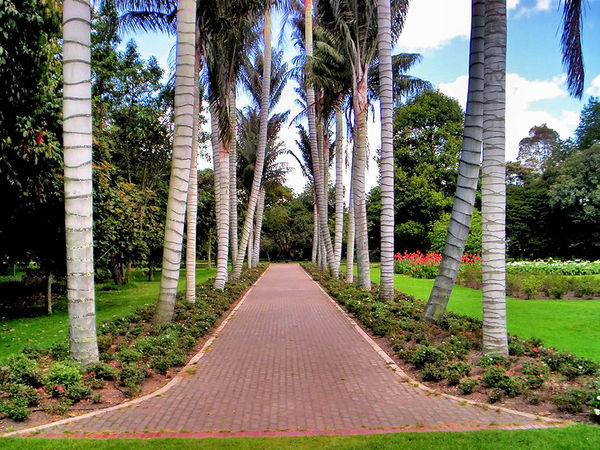 Gardens Eyeem Garden Garden Trees Tree The Way Forward Day Growth Outdoors No People Beauty In Nature Sky Nature