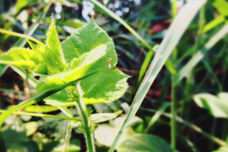 In alone Ant Animals Bug Natural Places Nature_collection Leaves Green Deep Close-up