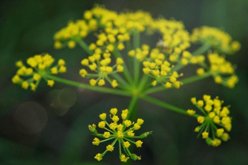Pretty Flowers Flora Tranquility Forestwalk Wildlife & Nature Yellow Flower Head Macro Flowers Wild Flowers Outdoors Little Yellow Flowers Bokeh Color Palette