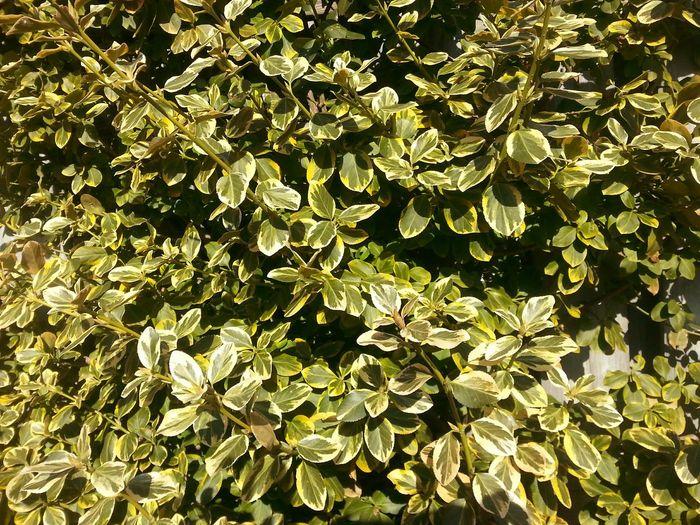 Leaves. Leaves Repost Green LittleFilter