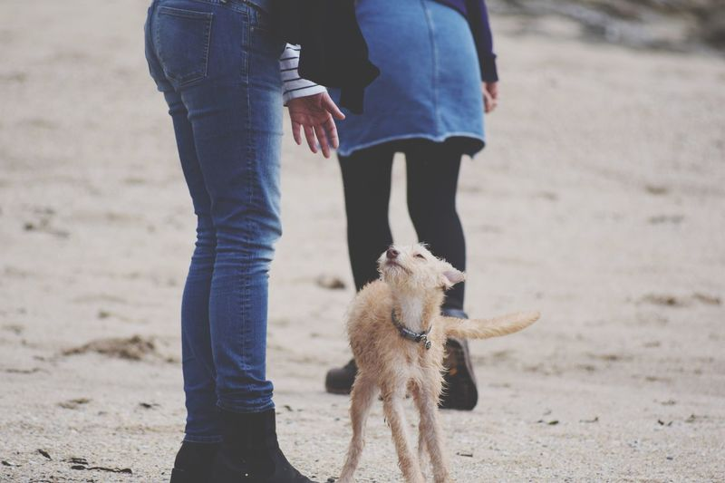 Everyone wants to say hello to her Low Section Of People And A Puppy Low Section Bedlington Whippet Person Saying Hello To Puppy Family Time Dog Walkig On The Beach EyeEm Selects Land Real People Beach Sand One Animal Low Section Pets Domestic Animals Canine Day Human Leg Outdoors Footwear Personal Perspective Mixed-breed Dog Pet Collar Human Connection Moments Of Happiness Streetwise Photography