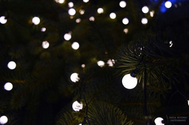 Hi! Święta 🎄 Choinka Lampki