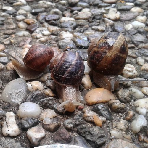 Taking Photos Snails