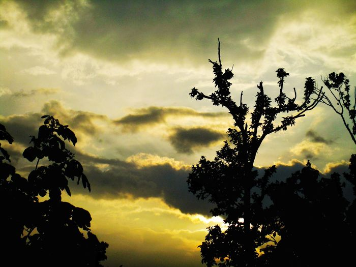 Tree Sunset Silhouette Branch Sky Cloud - Sky Sky Only Treetop Cumulus Cloud Heaven Cloudscape Growing Dramatic Sky Calm Countryside Cloud Storm Cloud