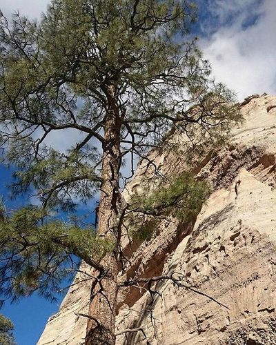 Another Sentinel from my trip to New Mexico. Tentrocks Natureboyphotos Newmexico Vacay