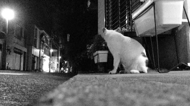 Stray Cat 野良猫 夜ねこ うしろアタマ