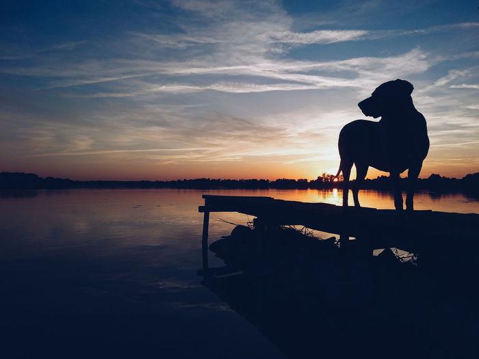 Landscape Romantic EyeEm Best Shots EyeEm Best Shots - Nature Spring Nature Beauty In Nature EyeEm Best Edits Dog Weimaraner Sunset Water Sunset Full Length Silhouette Lake Reflection Sky