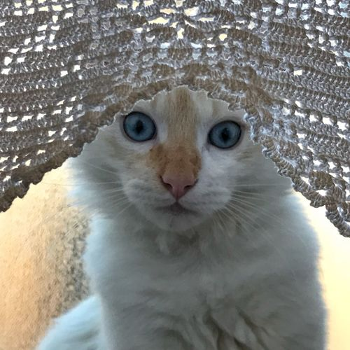 Kitten behind