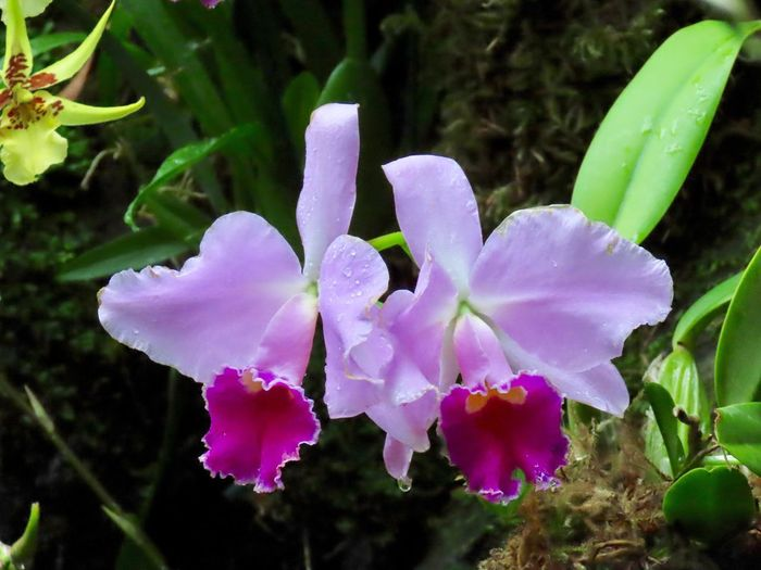 Orchids flowers close up pink petals green leaves beauty in nature Flowering Plant Freshness Growth No People