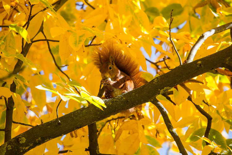 Low angle view of squirrel perching on tree
