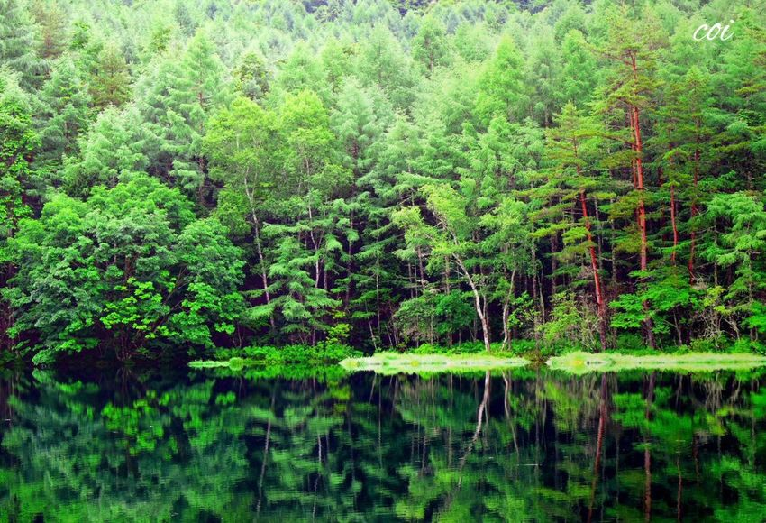 朝7時御鹿射池にて。緑の森の中赤松の赤が映える。季節の移り変わりを感じたくて何度も訪れる。自然のシンメトリーに心奪われる。 Memories Japan Beautiful Nature My Favorite  Traveling 水鏡 Emeyebestshot 絶景 Landscape