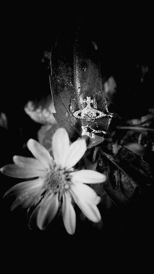 Nature Flower Rain