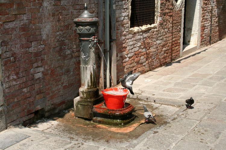 Bird Bath in