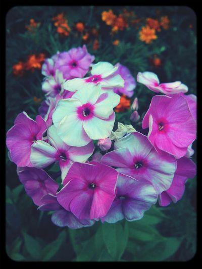 Summertime Flowerporn Flowers Summer Vibes