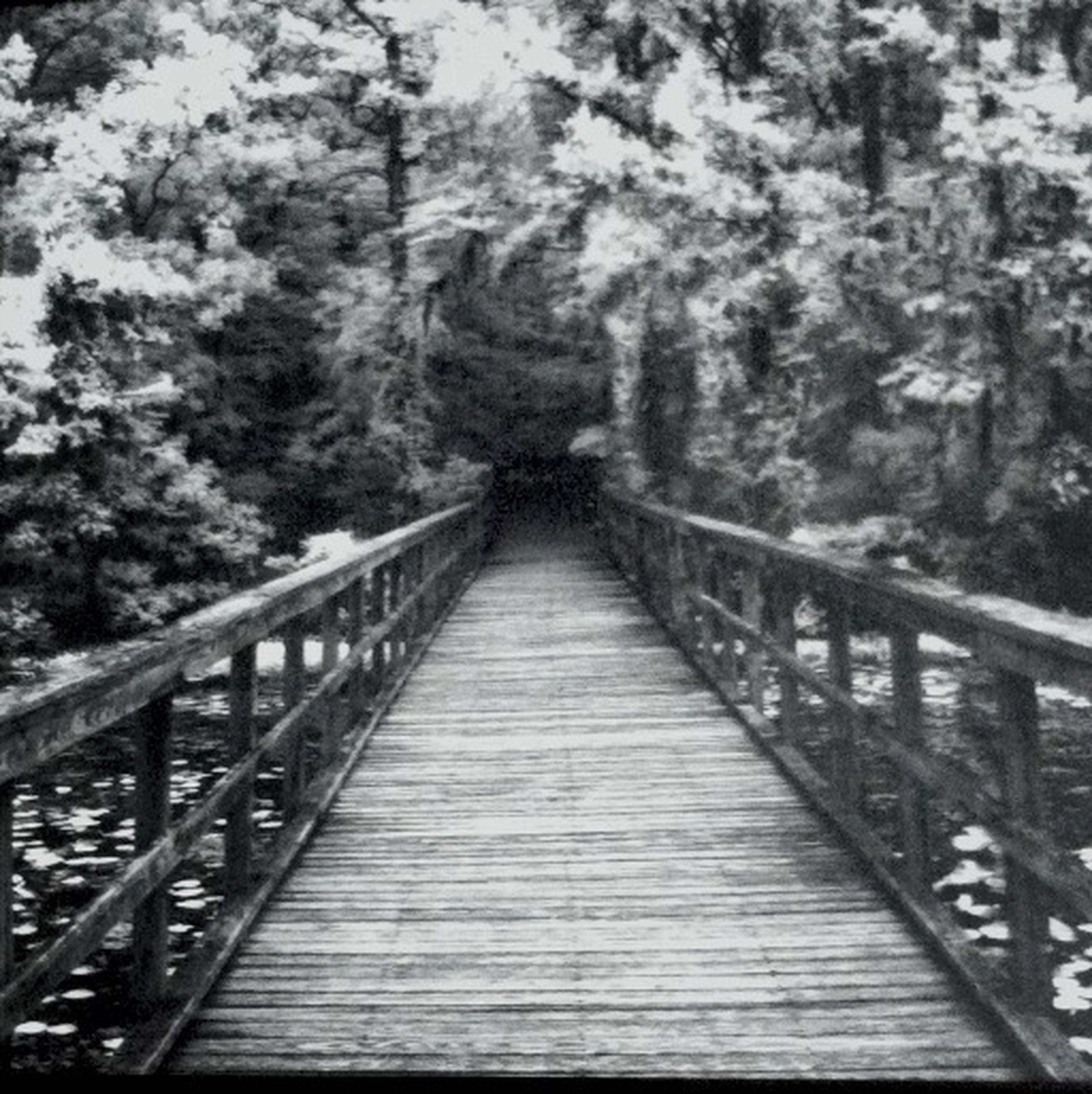 footbridge, railing, connection, the way forward, bridge - man made structure, tree, diminishing perspective, wood - material, bridge, built structure, tranquility, forest, nature, boardwalk, vanishing point, architecture, tranquil scene, day, long, outdoors