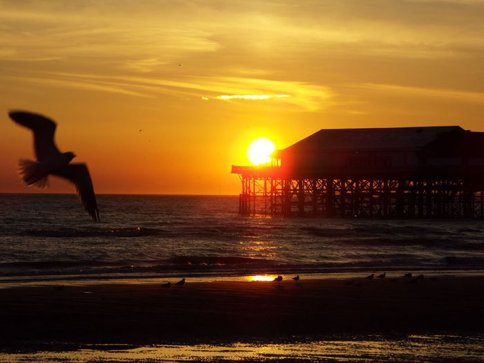 Red Sky Sunset Over The Sea Seascape Sea Sunset Sun Blackpool Central Pier Central Pier Seagull SEAGULL IN FLIGHT The Great Outdoors - 2016 EyeEm Awards 43 Golden Moments