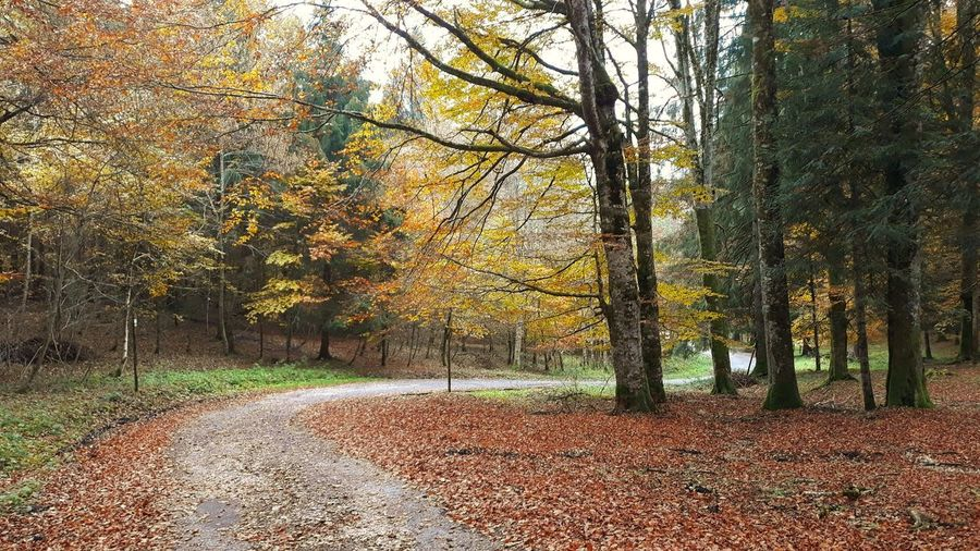 Trees by autumn leaves in forest