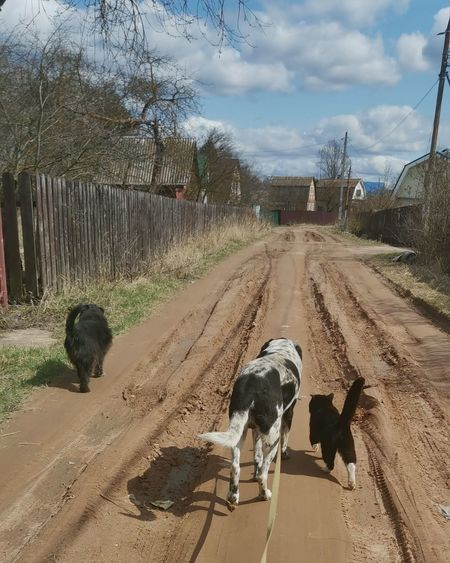 View of dogs on road against sky