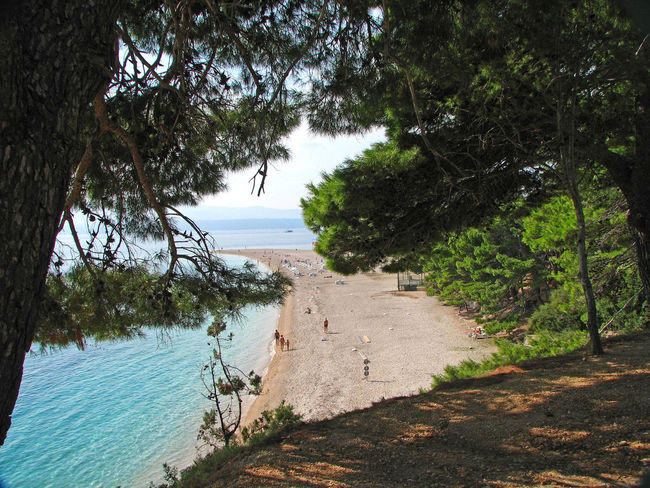 Trees And Beach Beach Beauty In Nature Croatian Beach Day Growth Nature Nature Beach No People Outdoors Sandy Beach? Scenics Sea Sky Tranquil Scene Tranquility Tree Water Your Ticket To Europe Forest By The Sea Greenery Scenery Lost In The Landscape