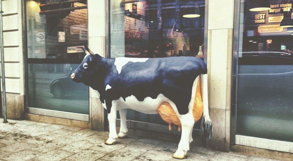 Animals Burger Time Streetphotography Nothingisordinary