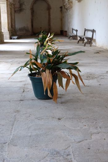 EyeEm Selects plant cloister