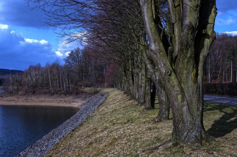 Bare trees on land against sky