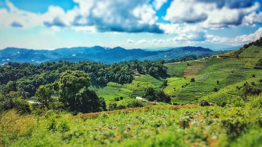 Chiang Mai Thailand Southeast Asia ASIA Outdoors Clouds Landscape Sunshine High Angle Blue Sky Lanna Northern Thailand Tilt Shift Mon Cham Mon Jam Miles Away Lost In The Landscape