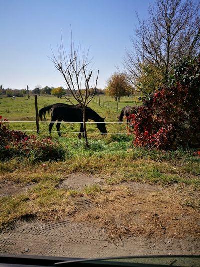 Green Horse Horse Friends Horse Riding Horseback Riding Horse Eating Light Horse Ears Tree Water Sky