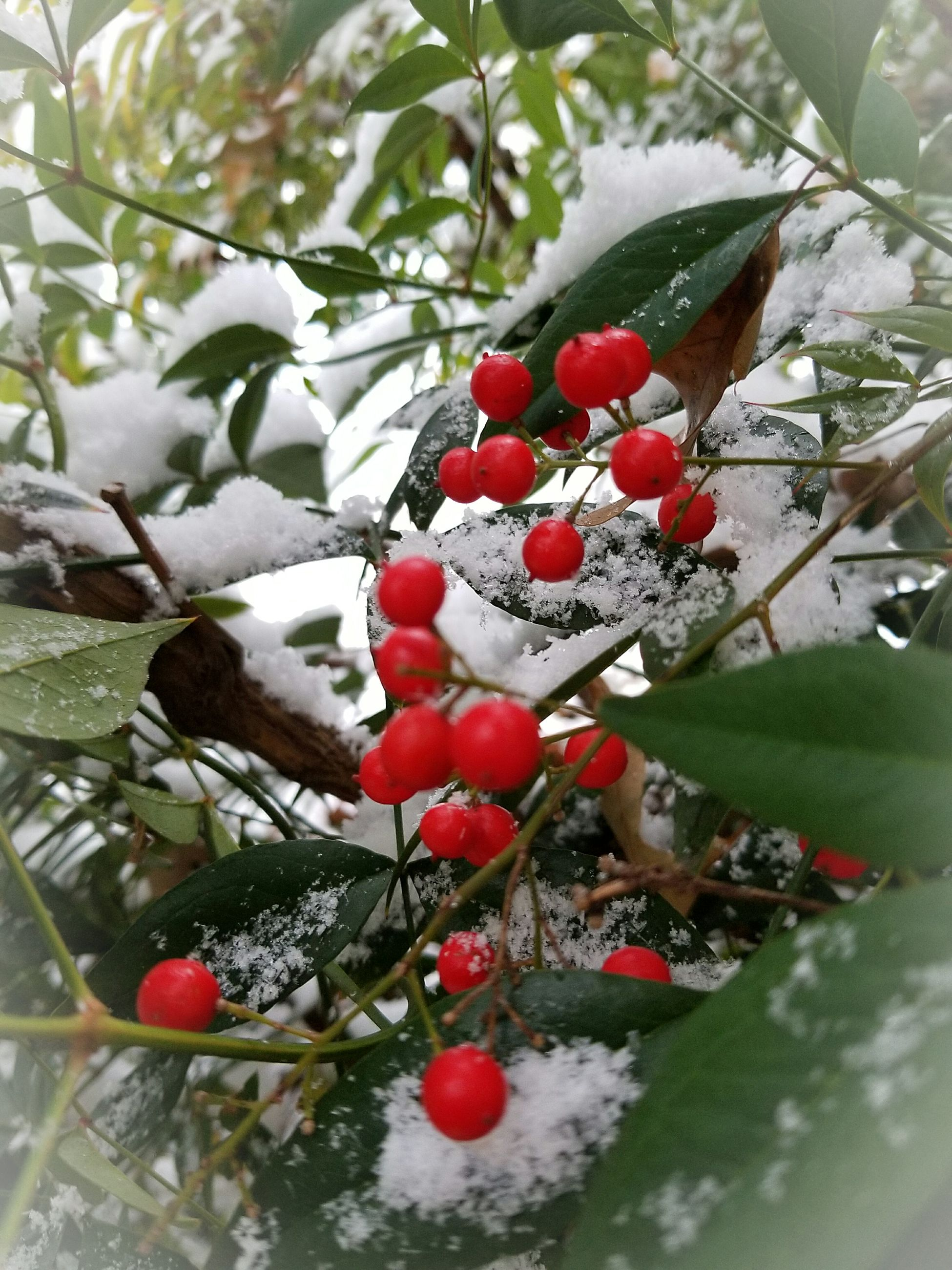 fruit, food and drink, red, no people, tree, close-up, food, cold temperature, freshness, nature, snow, day, outdoors, rose hip, growth, branch, beauty in nature