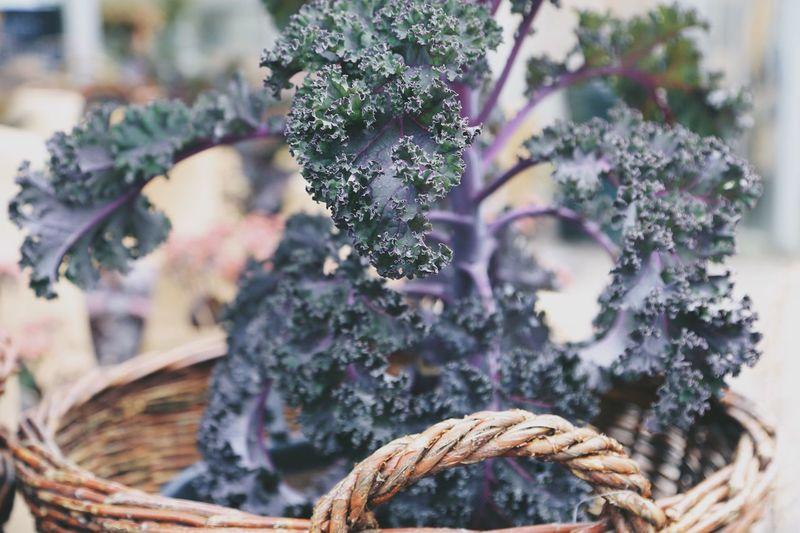 Close-up of purple flowering plants in basket