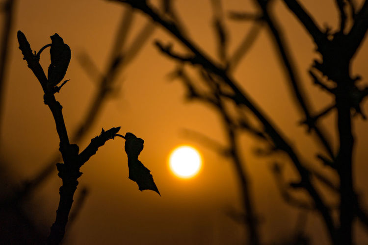 Low angle view of silhouette plant against sky during sunset