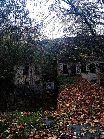 Abandoned Abadonedplaces Decay Lostplaces Lost Lost In The Landscape Landscape Urbam Urban Landscape Urbanphotography Urbex Urbexphotography Autumn Autumn Colors Leaves 🍁 Outside Autumnbeauty Full Frame Backgrounds Abstract Day No People Outdoors Close-up Nature