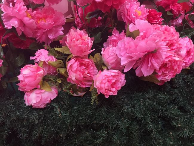 Pink Carnation Flowers Green Green Green!  Beauty In Nature Plant Flower Flower Bouquet  Carnation Flowers Carnation Pink Flower Pink Flower 🌸