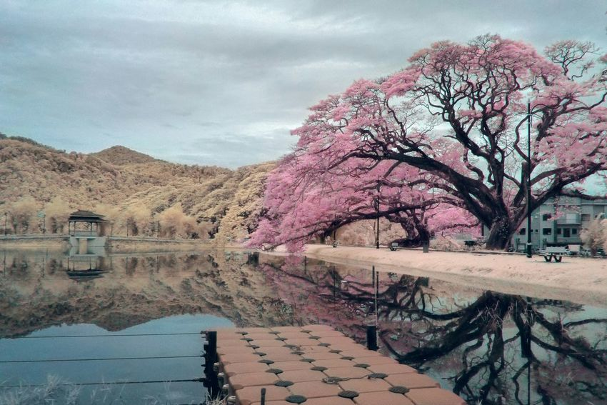 Landscape Shootermag Malaysia Taking Photos Dreamy Infrared Photography Surreal