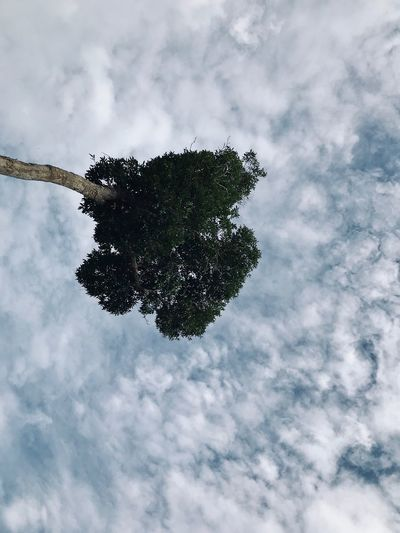 Sky Low Angle View Outdoors Treetop