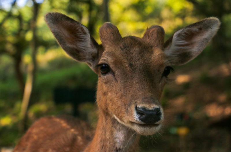 Deer Nature Wildlife & Nature Animal Themes Animal Wildlife Animals In The Wild Cute Day Deer Deer Portrait Fawn Forest Furniture Herbivorous Land Mammal No People One Animal Outdoors Outdoors Photograpghy  Vertebrate Wildlife