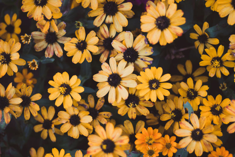 Beauty In Nature Flower Flower Head Flowering Plant Fragility Freshness Growth High Angle View Inflorescence Nature Outdoors Petal Plant Vulnerability  Yellow