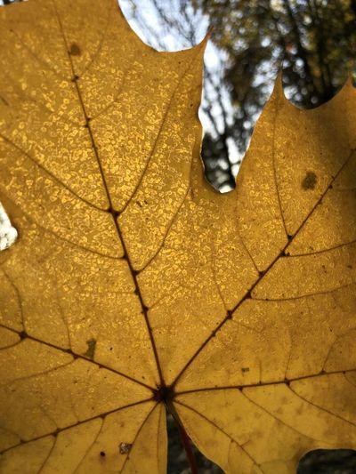 Close-up of dry leaf on tiled floor
