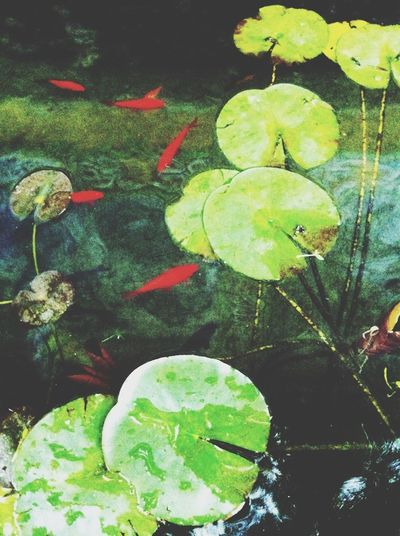 Water_collection Pisces Green Force What's Your Zodiac Sign?