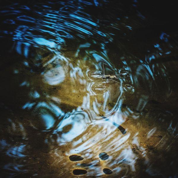 仲が良い アメンボ Water Strider Water Reflections Water Creek